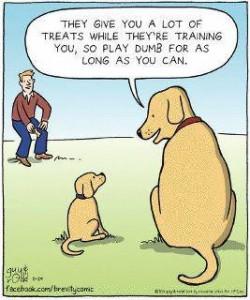 dumb dog trainer